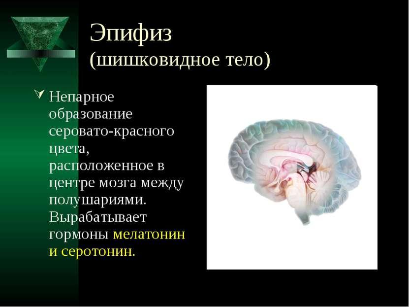 Эпифиз (шишковидное тело) Непарное образование серовато-красного цвета, распо...