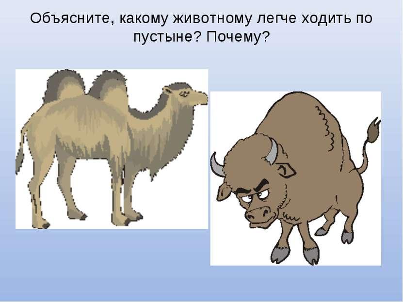 Объясните, какому животному легче ходить по пустыне? Почему?