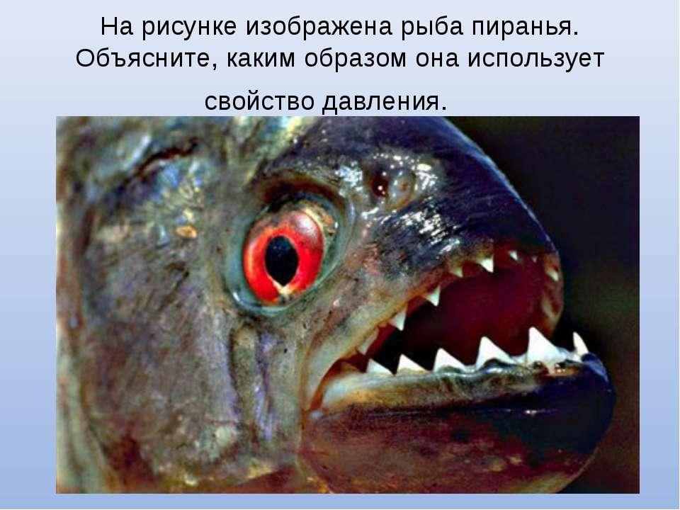 На рисунке изображена рыба пиранья. Объясните, каким образом она использует с...