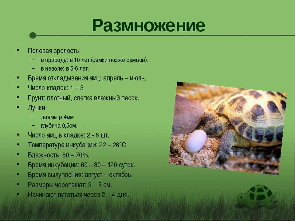Размножение Половая зрелость: в природе: в 10 лет (самки позже самцов). в нев...