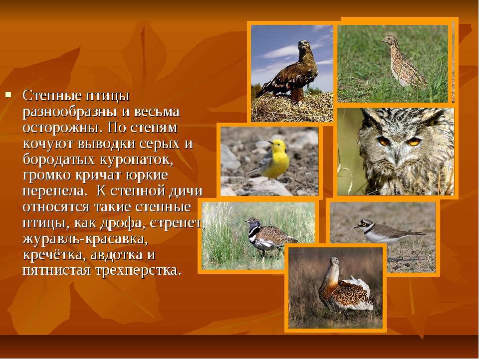 Степные птицы разнообразны и весьма осторожны. По степям кочуют выводки серых...