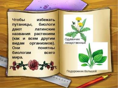 Чтобы избежать путаницы, биологи дают латинские названия растениям (как и все...