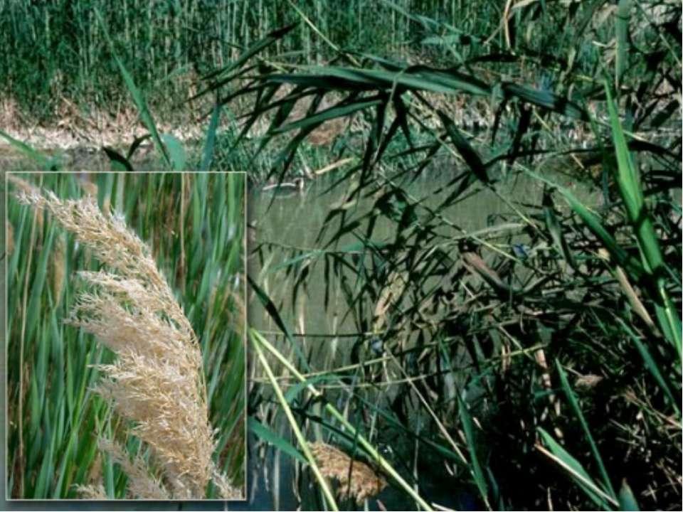 Есть ли у растений имена? На Земле существует более 350 тысяч видов растений....