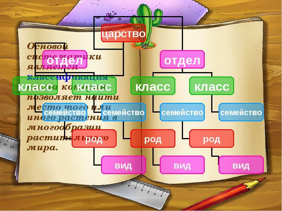 Основой систематики является классификация – схема которая позволяет найти ме...