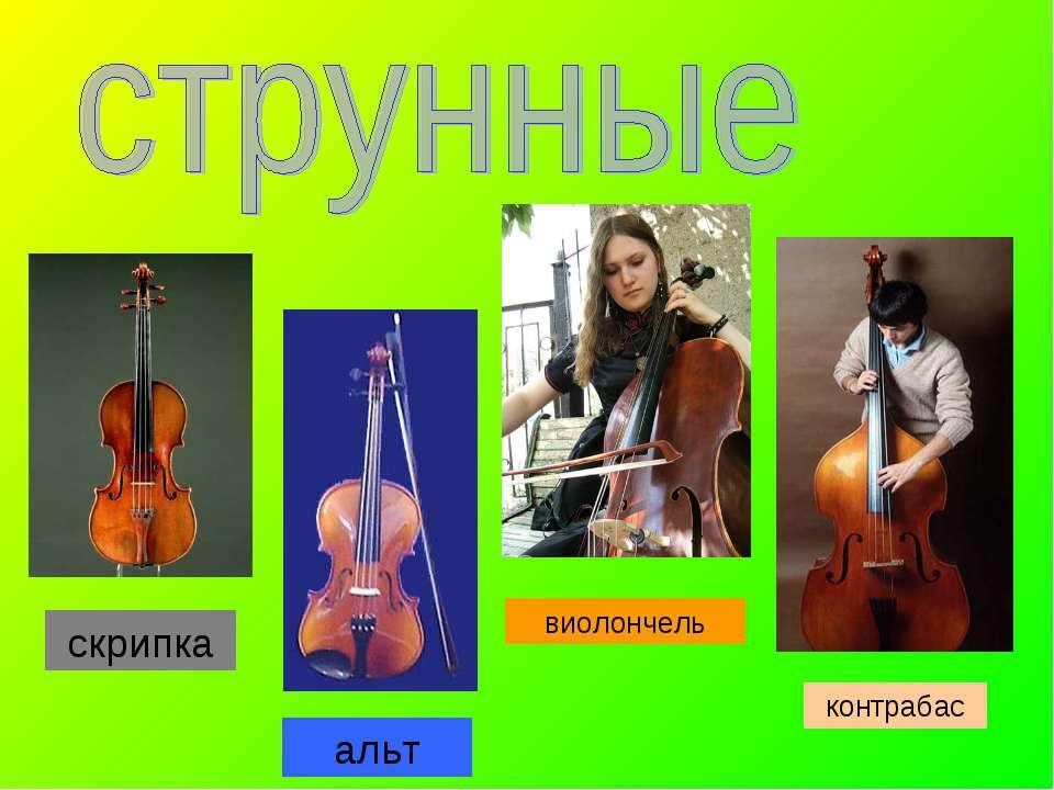 скрипка контрабас виолончель альт