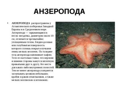 АНЗЕРОПОДА АНЗЕРОПОДА распространена у Атлантического побережья Западной Евро...