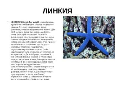 ЛИНКИЯ ЛИНКИЯ (Linckia laevigata) Весьма обычна на тропических мелководьях Ти...