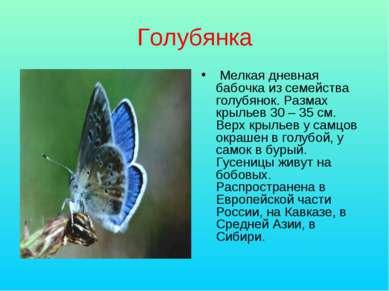 Голубянка Мелкая дневная бабочка из семейства голубянок. Размах крыльев 30 – ...