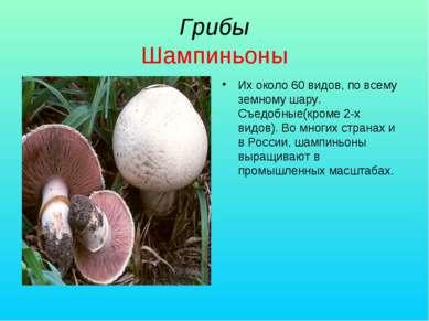 Грибы Шампиньоны Их около 60 видов, по всему земному шару. Съедобные(кроме 2-...