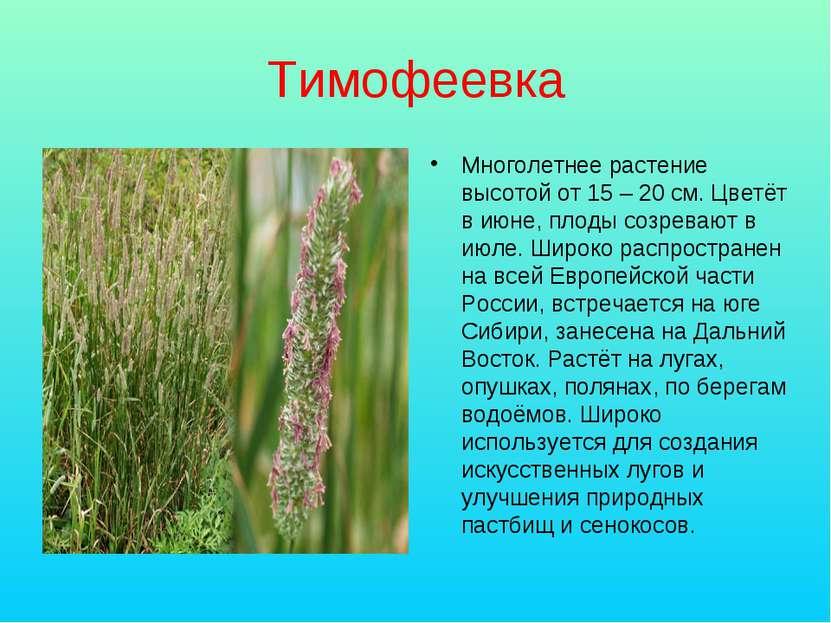 Тимофеевка Многолетнее растение высотой от 15 – 20 см. Цветёт в июне, плоды с...