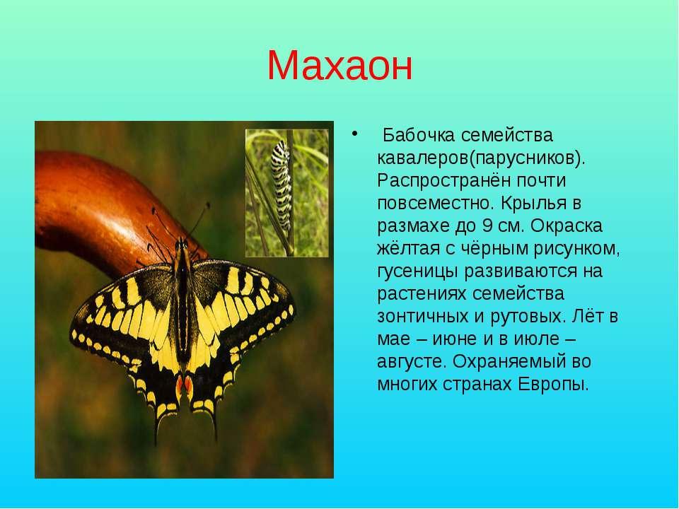 Махаон Бабочка семейства кавалеров(парусников). Распространён почти повсемест...