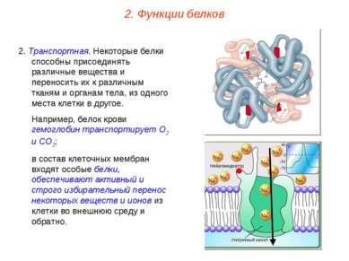 2. Транспортная. Некоторые белки способны присоединять различные вещества и п...
