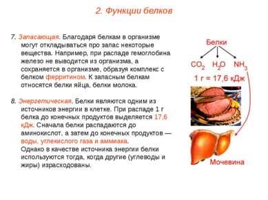 7. Запасающая. Благодаря белкам в организме могут откладываться про запас нек...