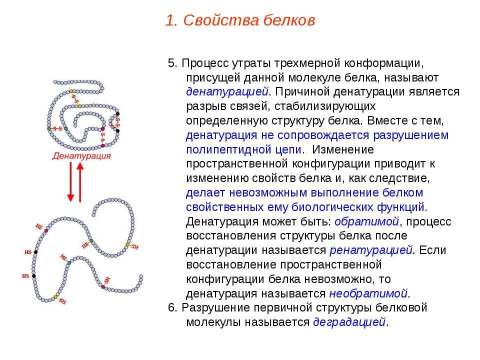 5. Процесс утраты трехмерной конформации, присущей данной молекуле белка, наз...