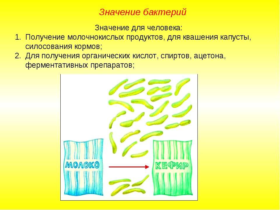 Значение бактерий Значение для человека: Получение молочнокислых продуктов, д...