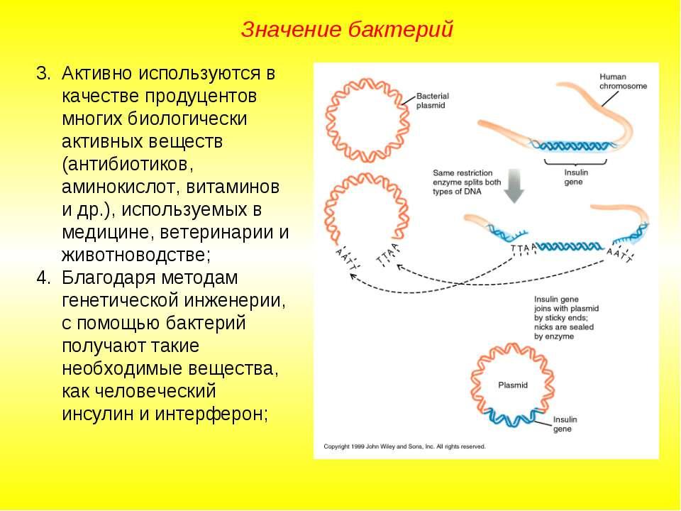 Значение бактерий Активно используются в качестве продуцентов многих биологич...