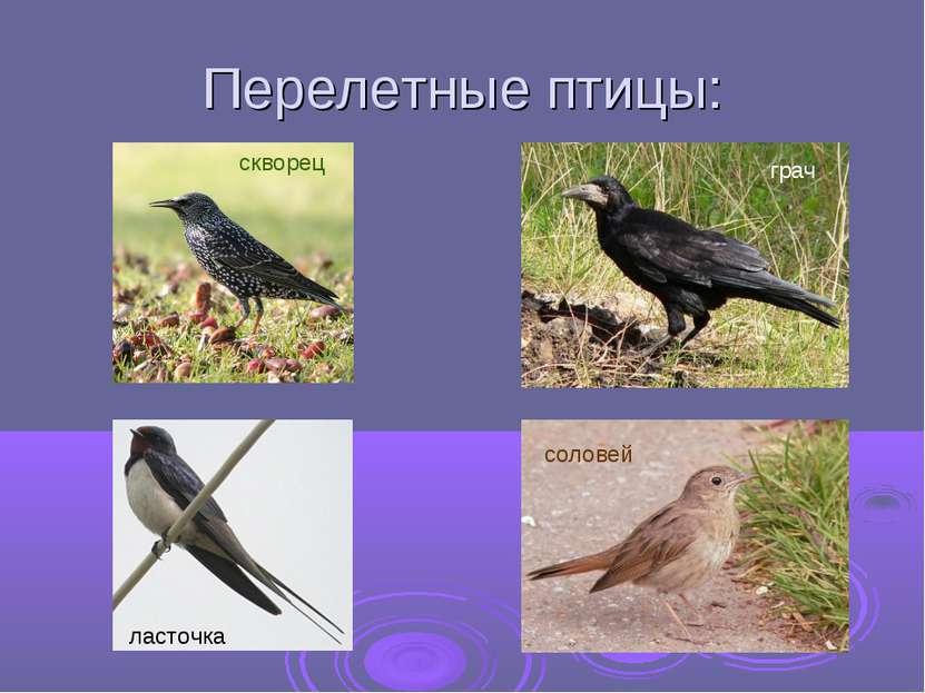 Перелетные птицы: