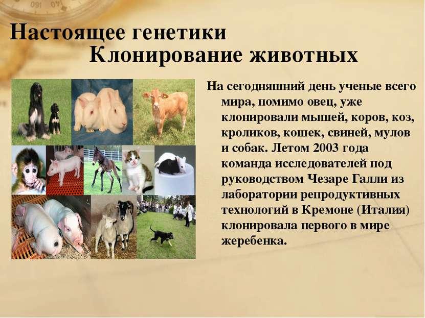 Настоящее генетики Клонирование животных На сегодняшний день ученые всего мир...