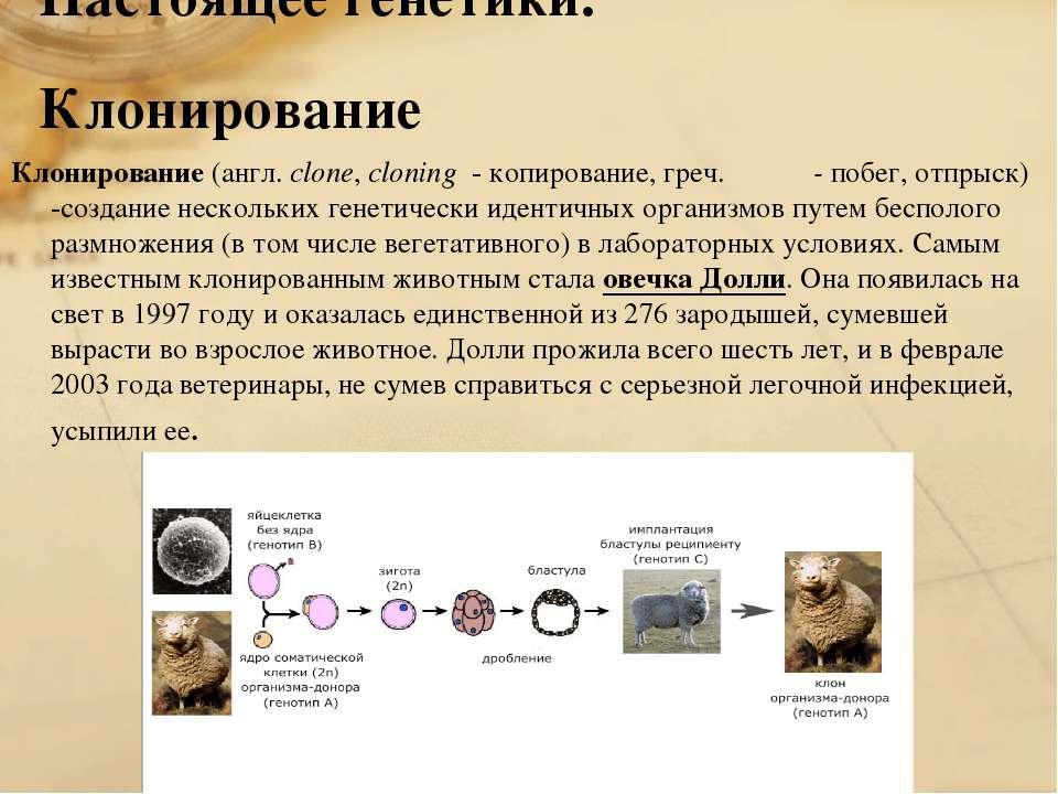 Настоящее генетики. Клонирование Клонирование (англ. clone, cloning - копиров...
