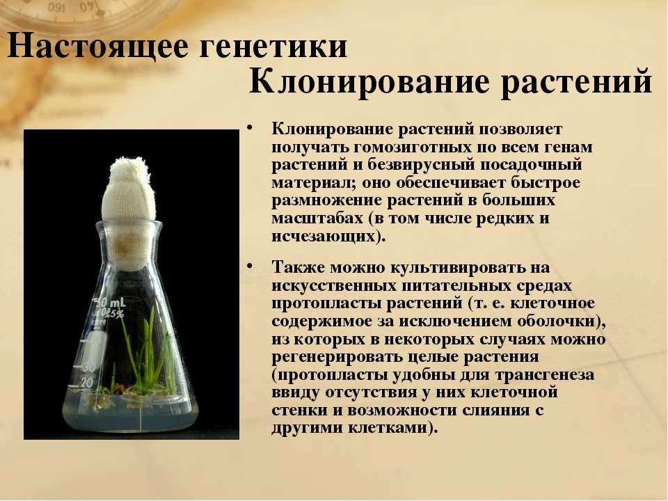 Настоящее генетики Клонирование растений Клонирование растений позволяет полу...