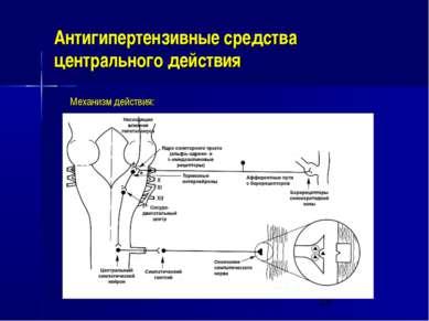 Антигипертензивные средства центрального действия Механизм действия: