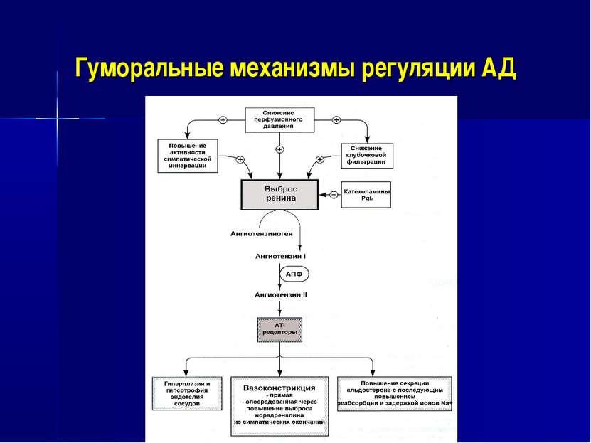Гуморальные механизмы регуляции АД