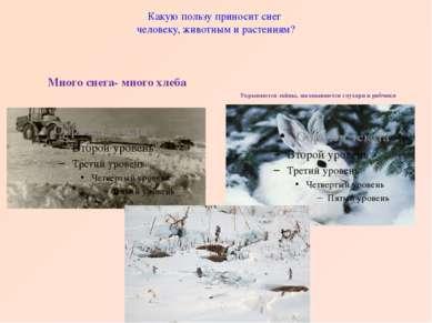Какую пользу приносит снег человеку, животным и растениям? Много снега- много...