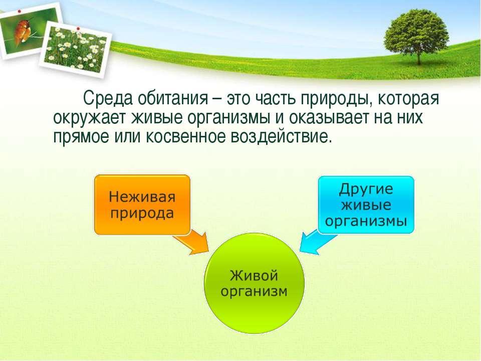 Среда обитания – это часть природы, которая окружает живые организмы и оказыв...