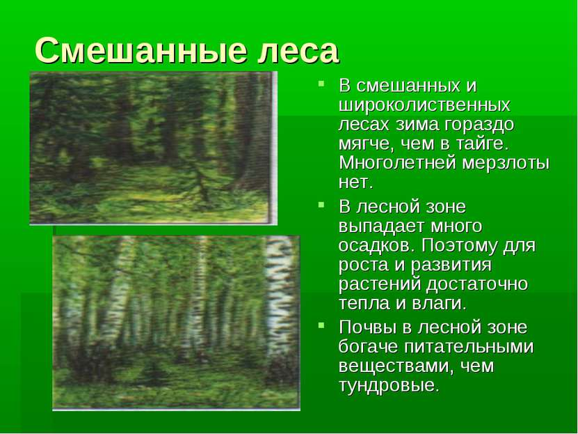 Смешанные леса В смешанных и широколиственных лесах зима гораздо мягче, чем в...