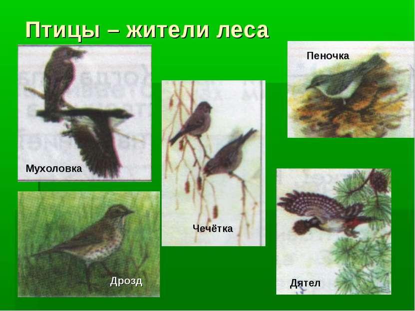 Птицы – жители леса Чечётка Дятел Пеночка Дрозд Мухоловка