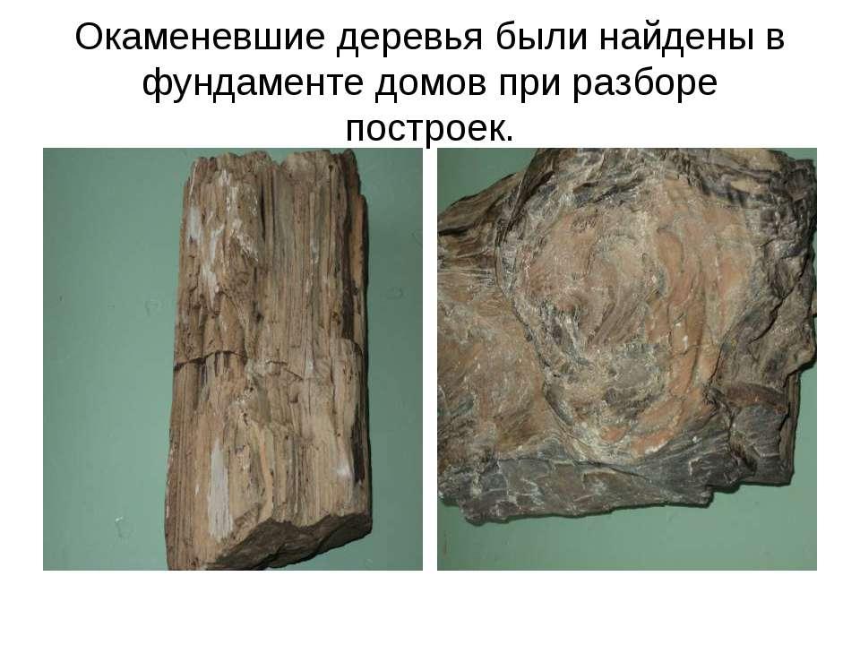 Окаменевшие деревья были найдены в фундаменте домов при разборе построек.