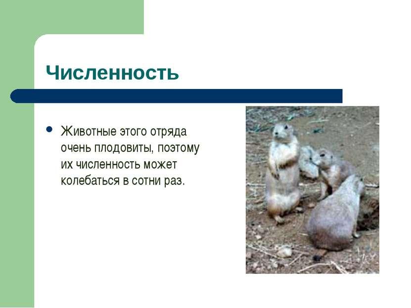 Численность Животные этого отряда очень плодовиты, поэтому их численность мож...