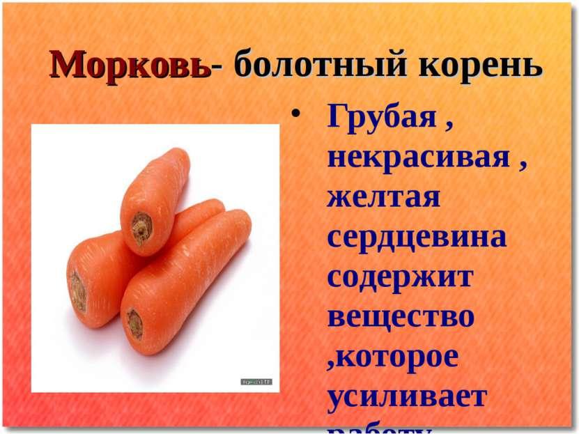 Морковь- болотный корень Грубая , некрасивая , желтая сердцевина содержит вещ...