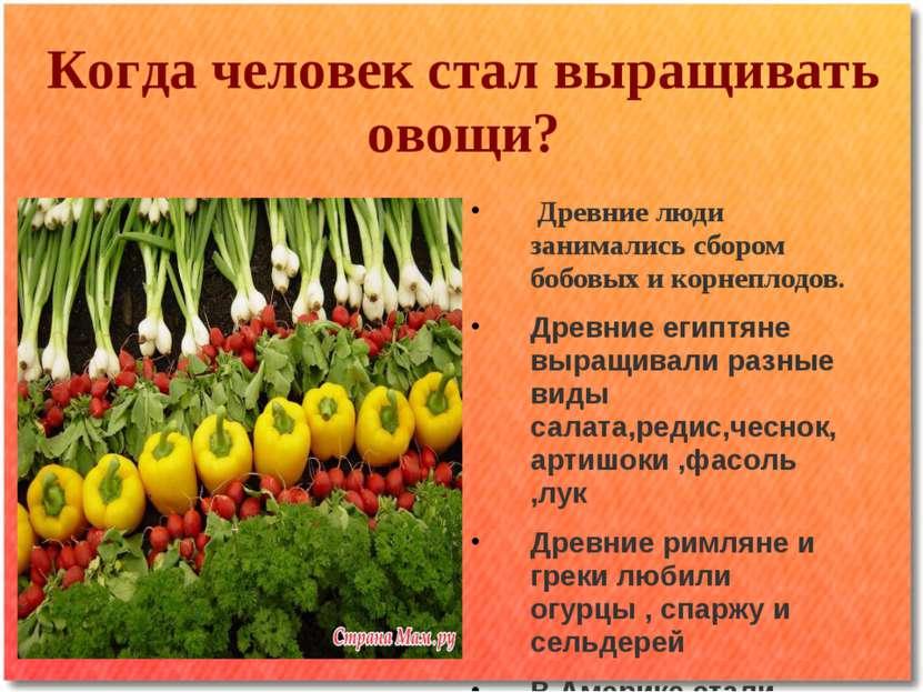Древние люди занимались сбором бобовых и корнеплодов. Древние египтяне выращи...