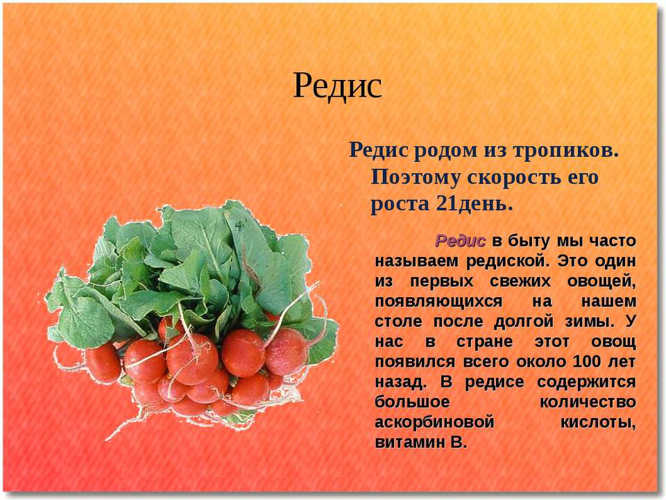мире поздравление с овощами на день рождения про редиску одно самых