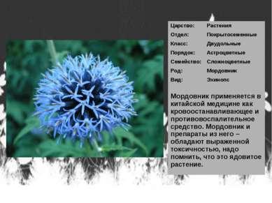Царство: Растения Отдел: Покрытосеменные Класс: Двудольные Порядок: Астроцвет...