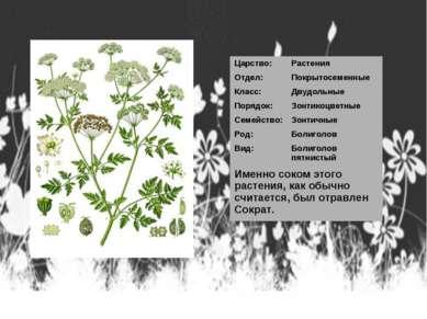 Царство: Растения Отдел: Покрытосеменные Класс: Двудольные Порядок: Зонтикоцв...