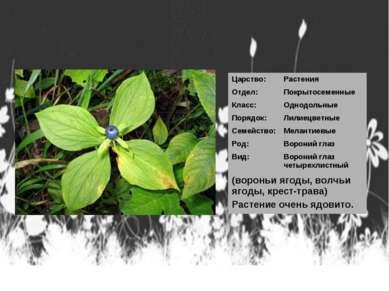 Царство: Растения Отдел: Покрытосеменные Класс: Однодольные Порядок: Лилиецве...