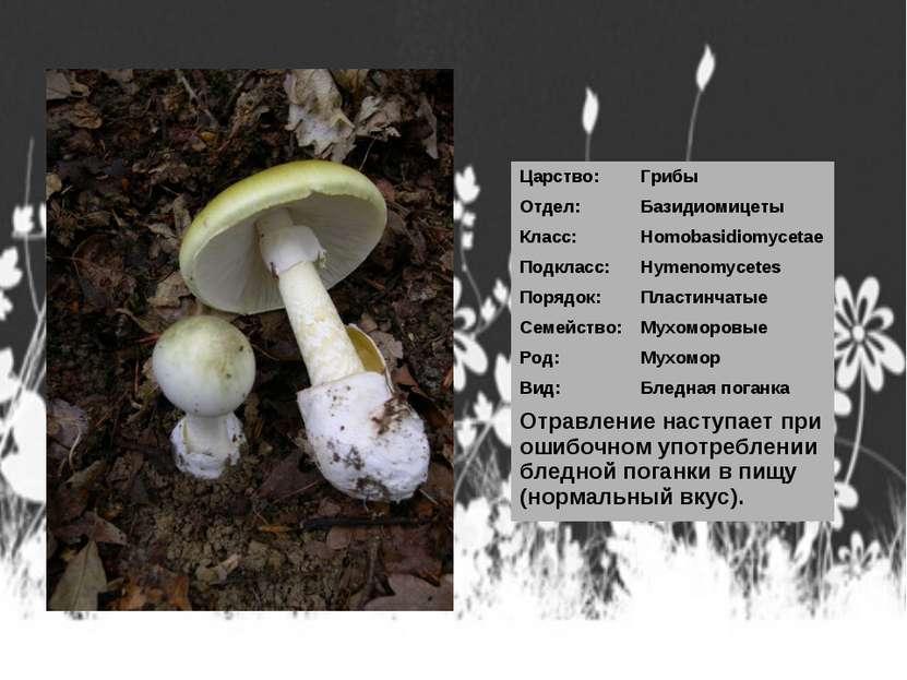 Царство: Грибы Отдел: Базидиомицеты Класс: Homobasidiomycetae Подкласс: Hymen...