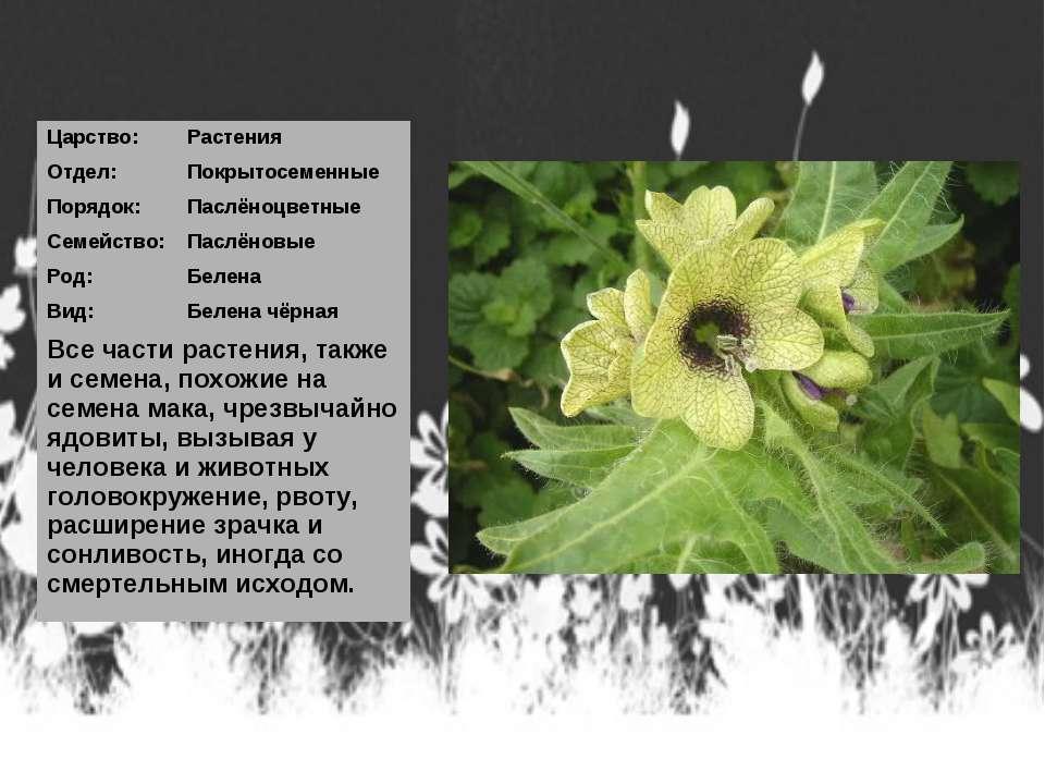 Царство: Растения Отдел: Покрытосеменные Порядок: Паслёноцветные Семейство: П...
