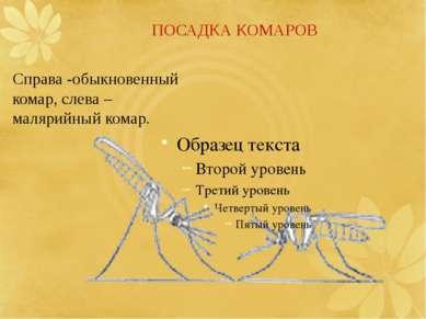 ПОСАДКА КОМАРОВ Справа-обыкновенный комар,слева– малярийный комар.