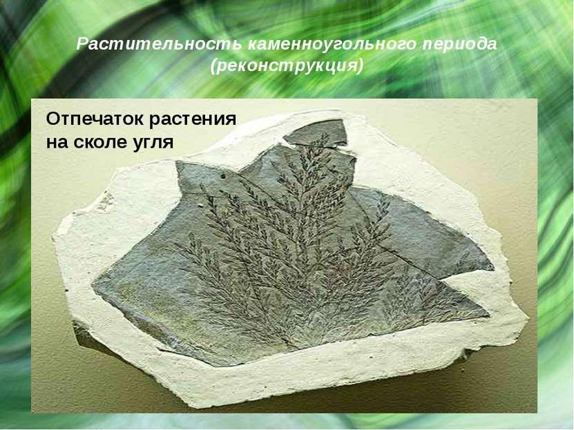 Растительность каменноугольного периода (реконструкция)