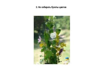 3. Не собирать букеты цветов