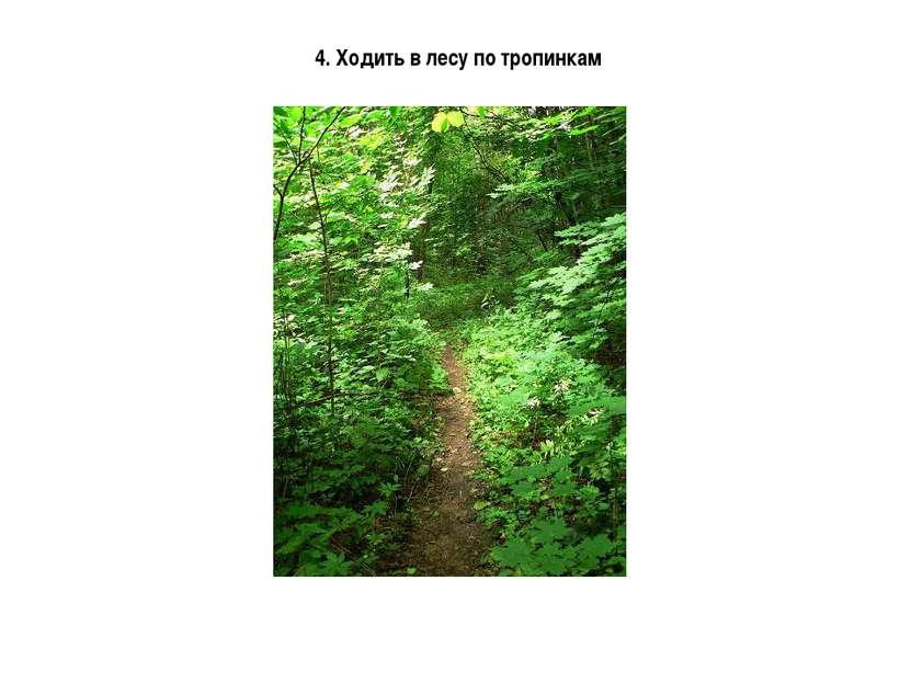 4. Ходить в лесу по тропинкам
