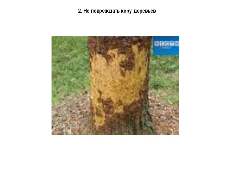 2. Не повреждать кору деревьев