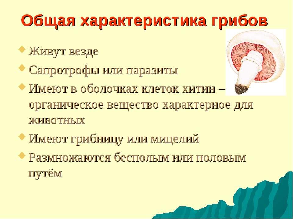 Общая характеристика грибов Живут везде Сапротрофы или паразиты Имеют в оболо...