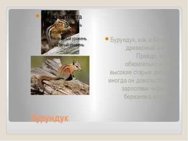 бурундук Бурундук, как и белка, — древесный житель. Правда, ему не обязательн...