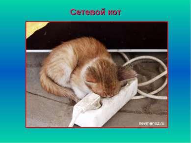 Сетевой кот