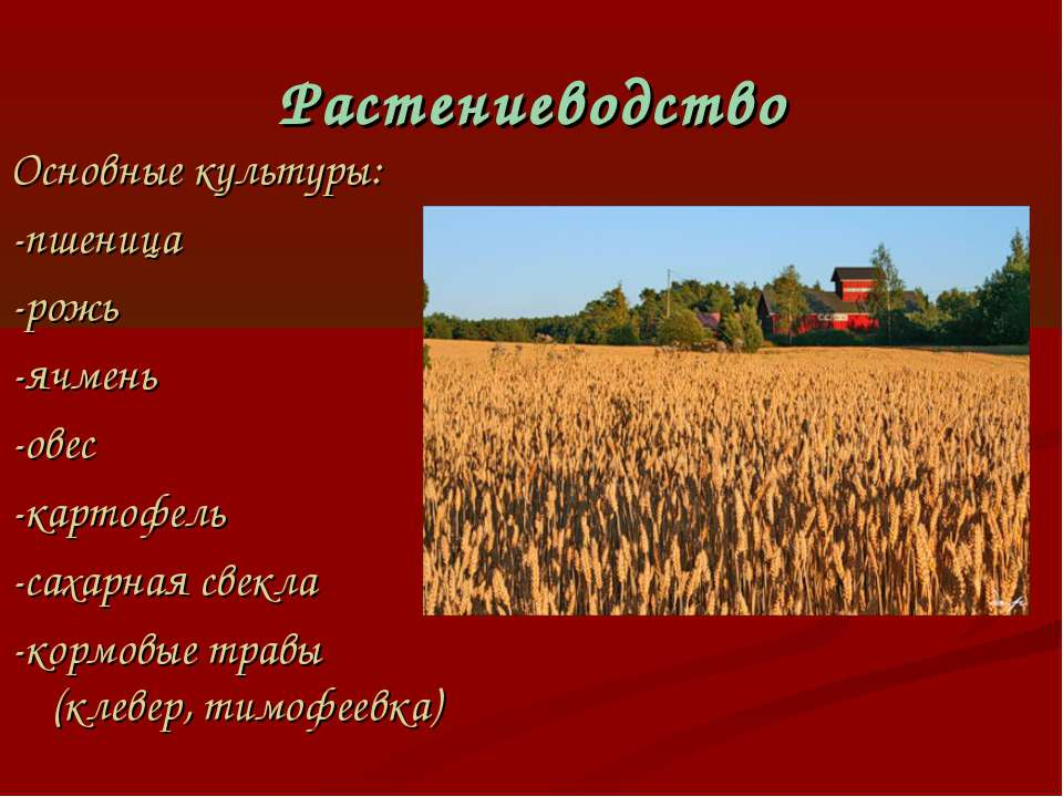 Растениеводство Основные культуры: -пшеница -рожь -ячмень -овес -картофель -с...