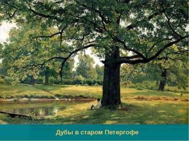 Дубы в старом Петергофе
